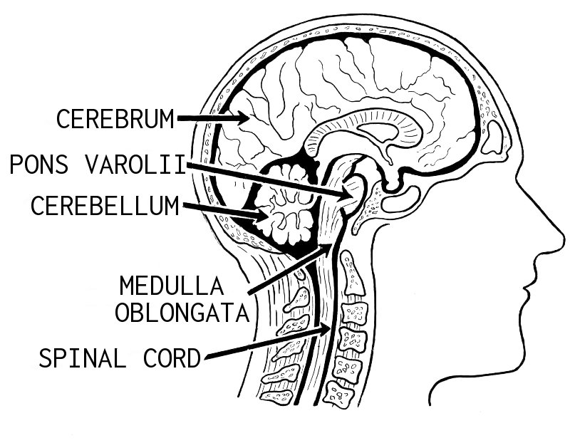 Is the Medulla the Home of Ego?